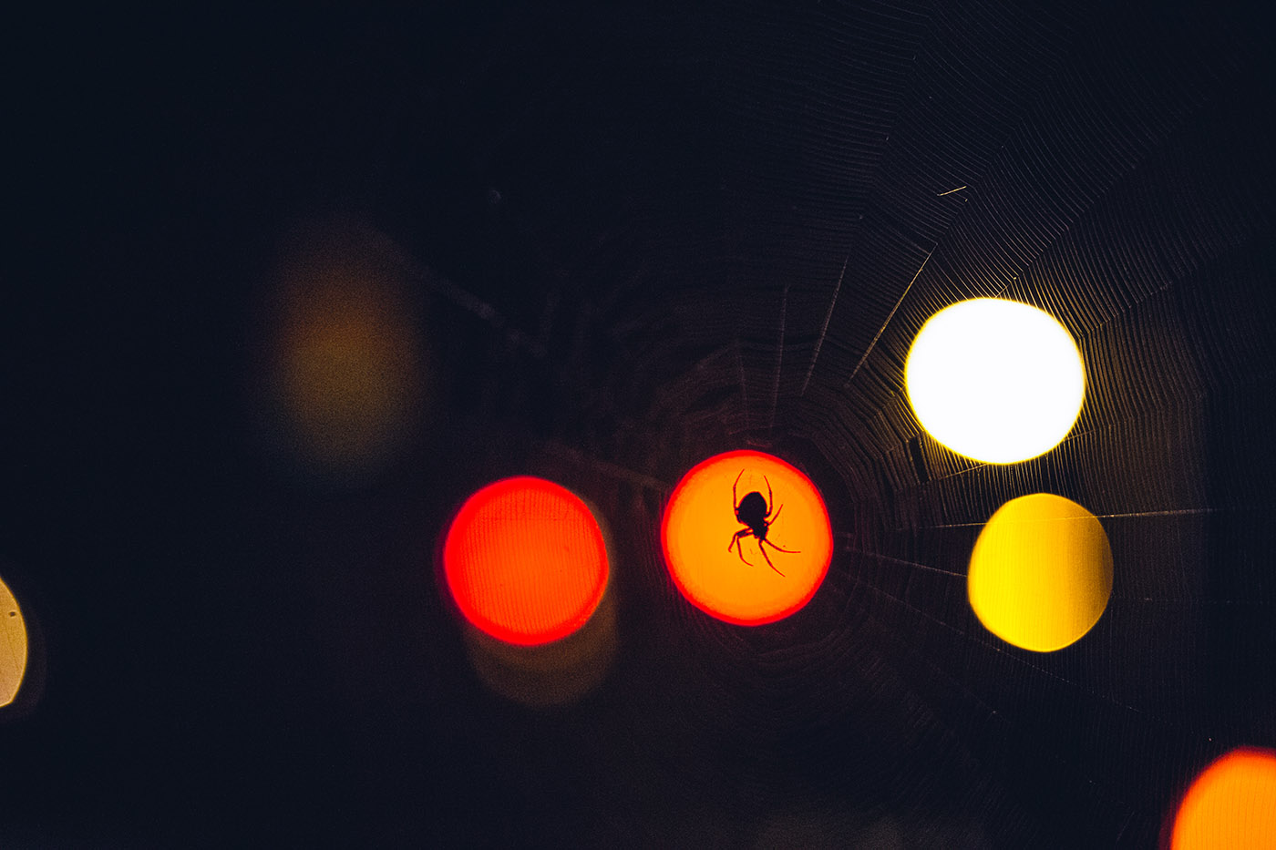 Art Photography: Spider backlit by streetlights.